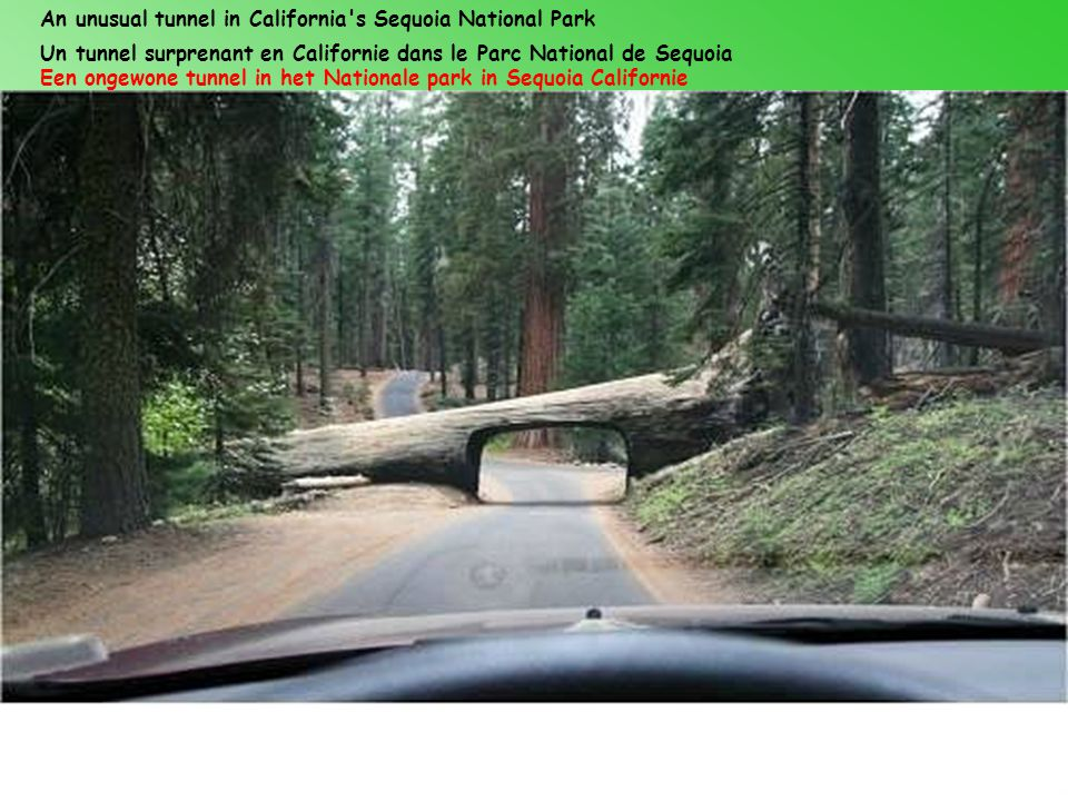 An unusual tunnel in California s Sequoia National Park