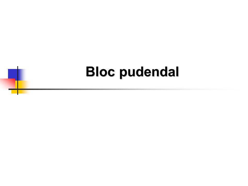 Bloc pudendal