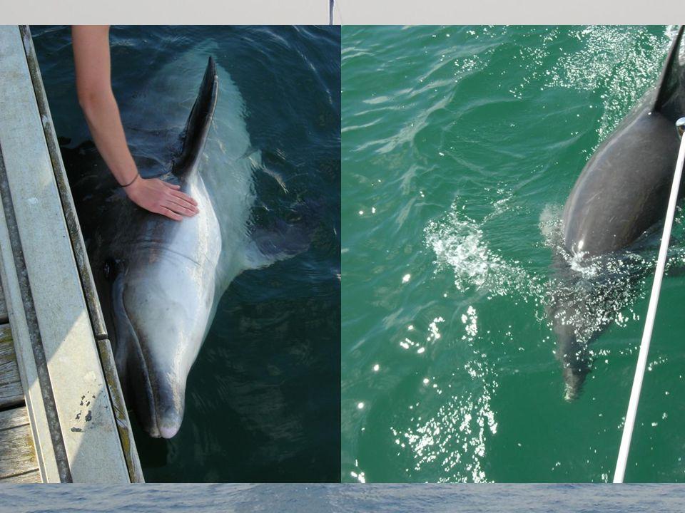Nog altijd een illusie, maar de dolfijnen die kunnen echt zijn.