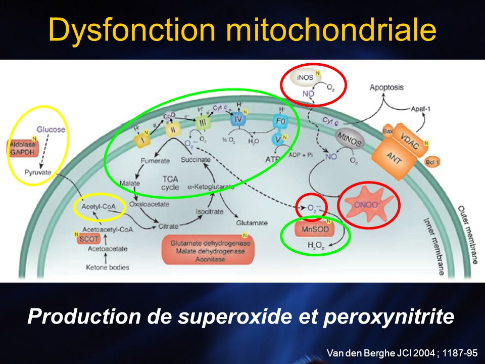 Dysfonction mitochondriale