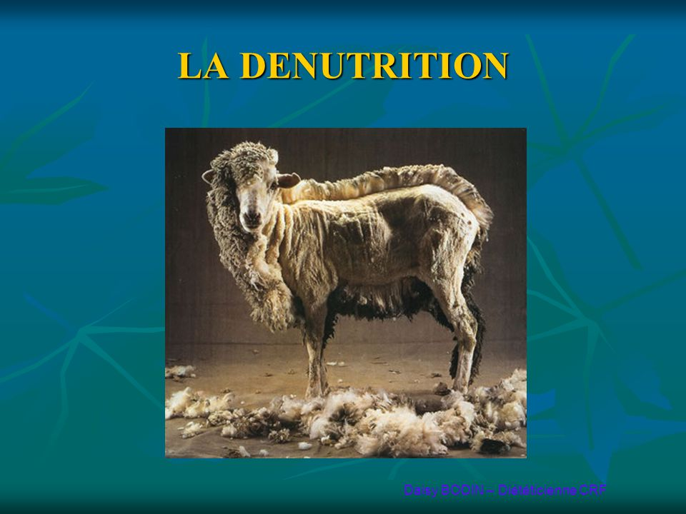 LA DENUTRITION Daisy BODIN – Diététicienne CRF