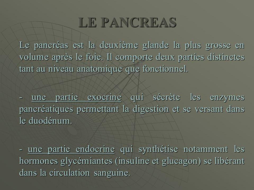 LE PANCREAS