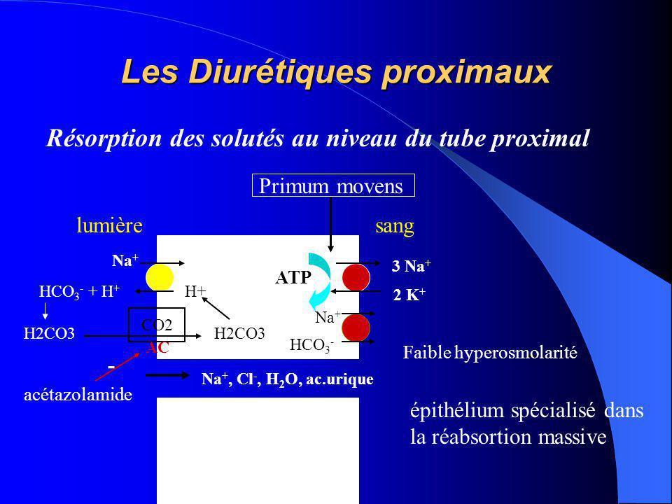 Les Diurétiques proximaux