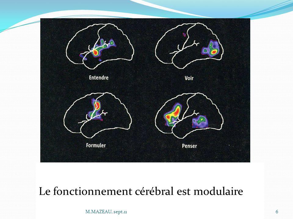 Le fonctionnement cérébral est modulaire