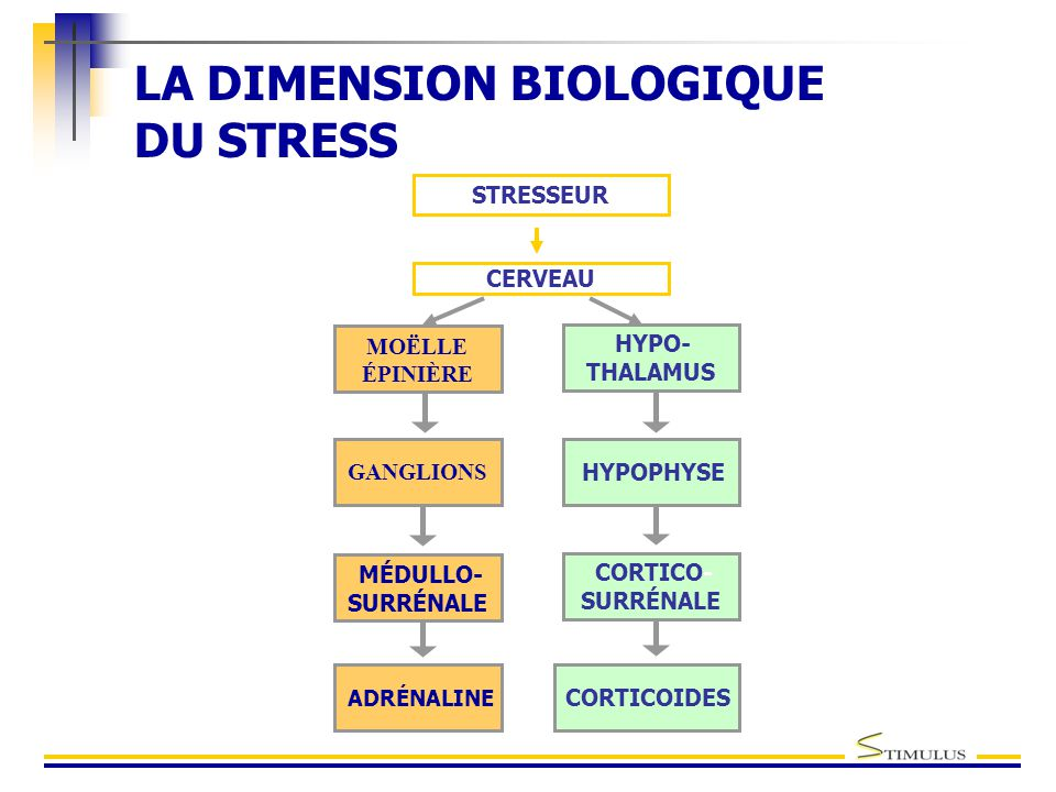 LA DIMENSION BIOLOGIQUE DU STRESS