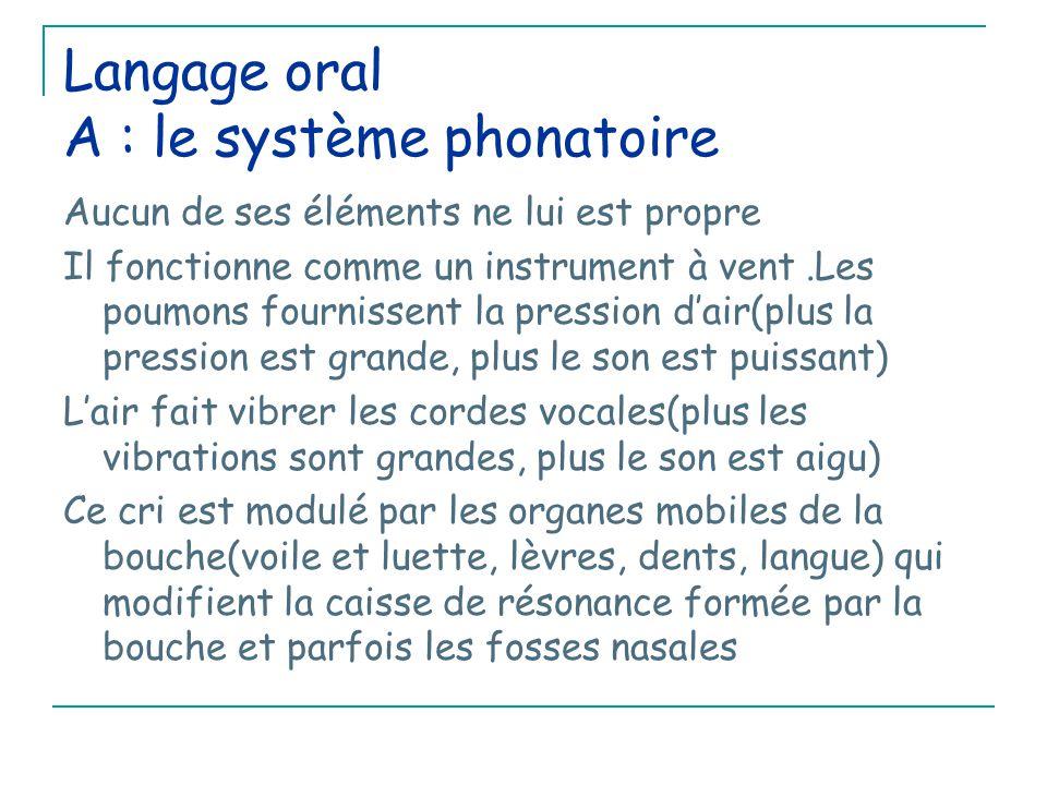 Langage oral A : le système phonatoire