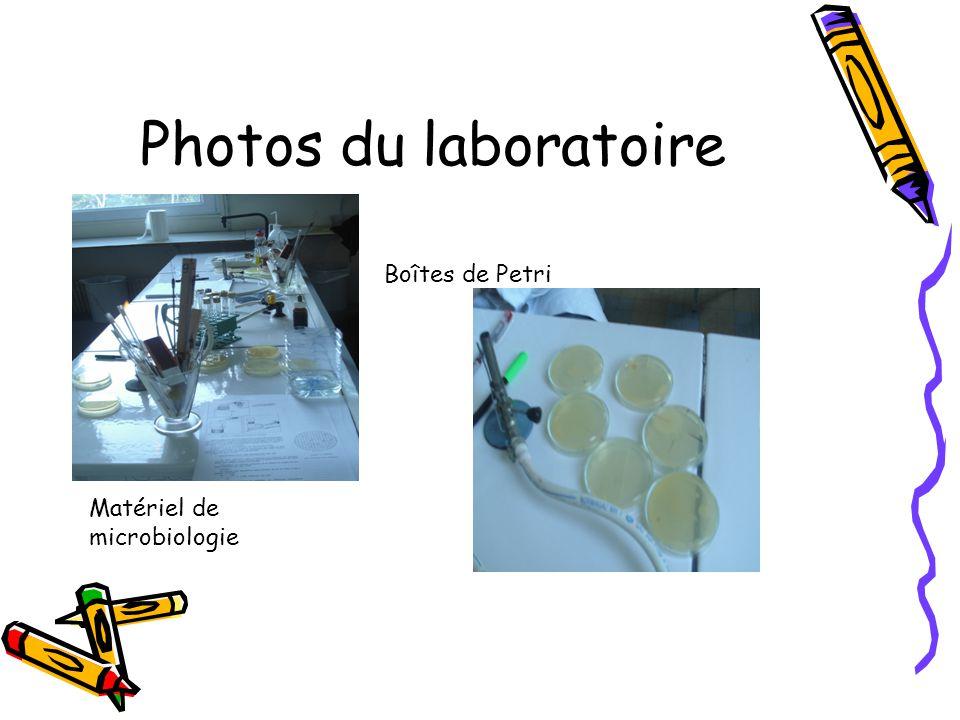 Photos du laboratoire Boîtes de Petri Matériel de microbiologie