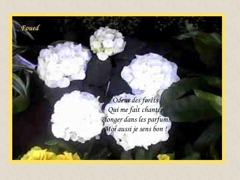 Foued Odeur des forêts Qui me fait chanter Plonger dans les parfums Moi aussi je sens bon !