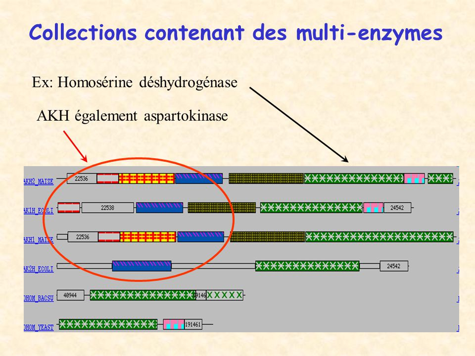Collections contenant des multi-enzymes