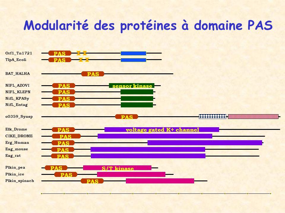 Modularité des protéines à domaine PAS