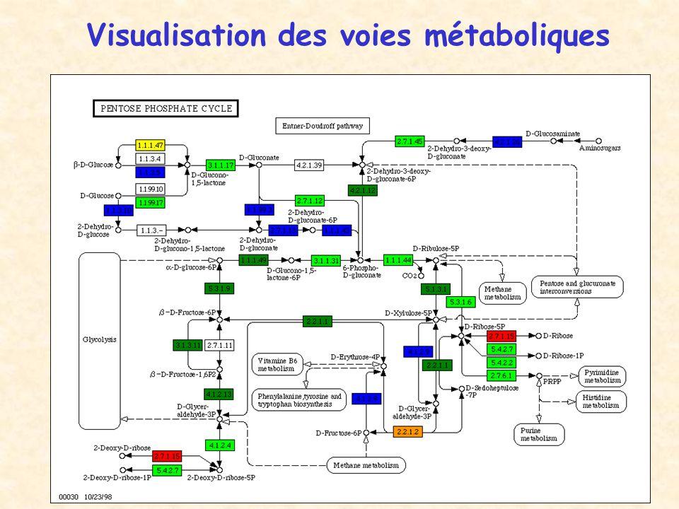 Visualisation des voies métaboliques