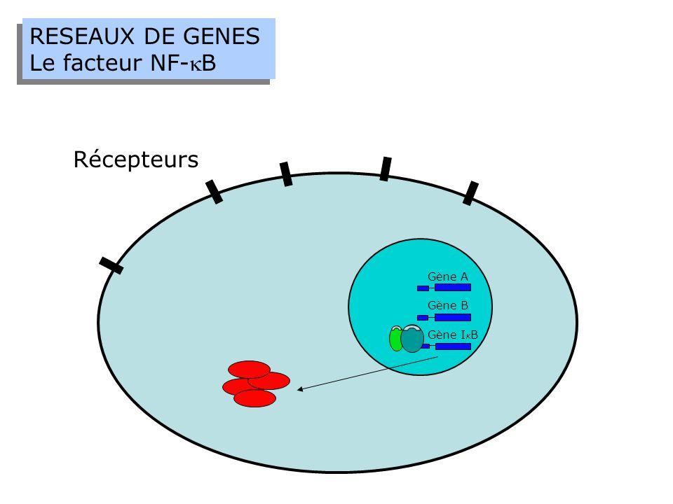 RESEAUX DE GENES Le facteur NF-kB Récepteurs Gène A Gène B Gène IkB
