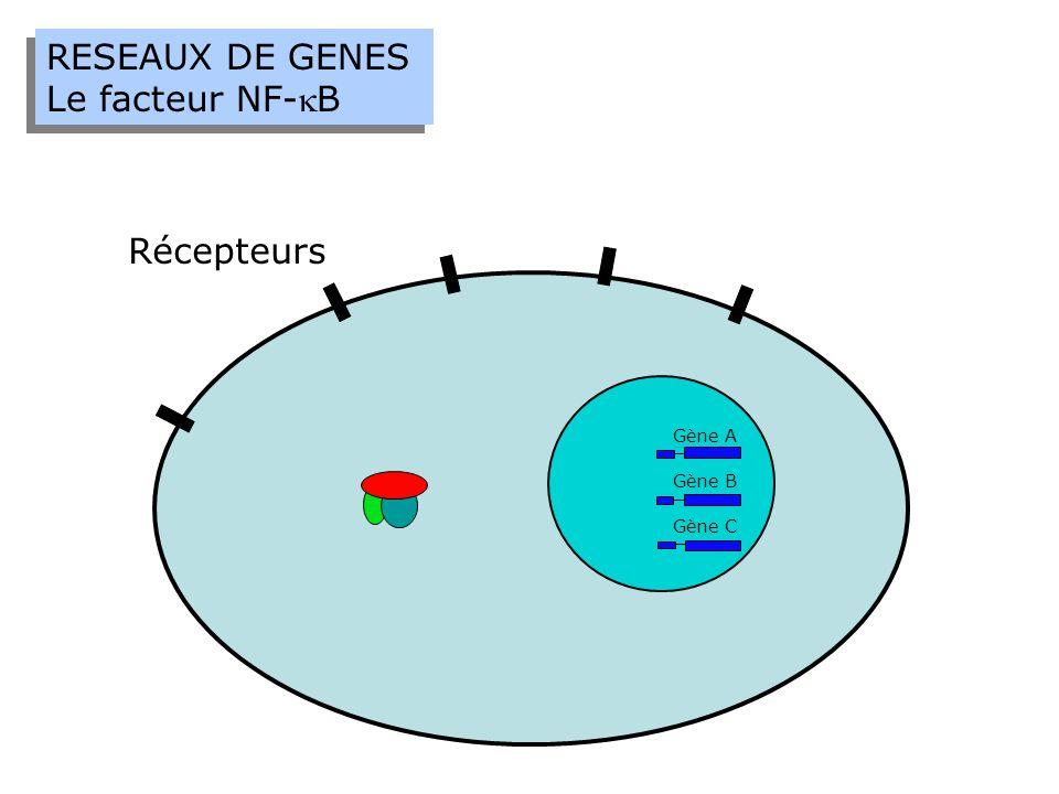 RESEAUX DE GENES Le facteur NF-kB Récepteurs Gène A Gène B Gène C