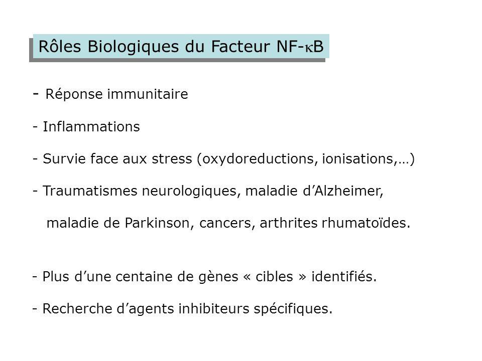 Rôles Biologiques du Facteur NF-kB