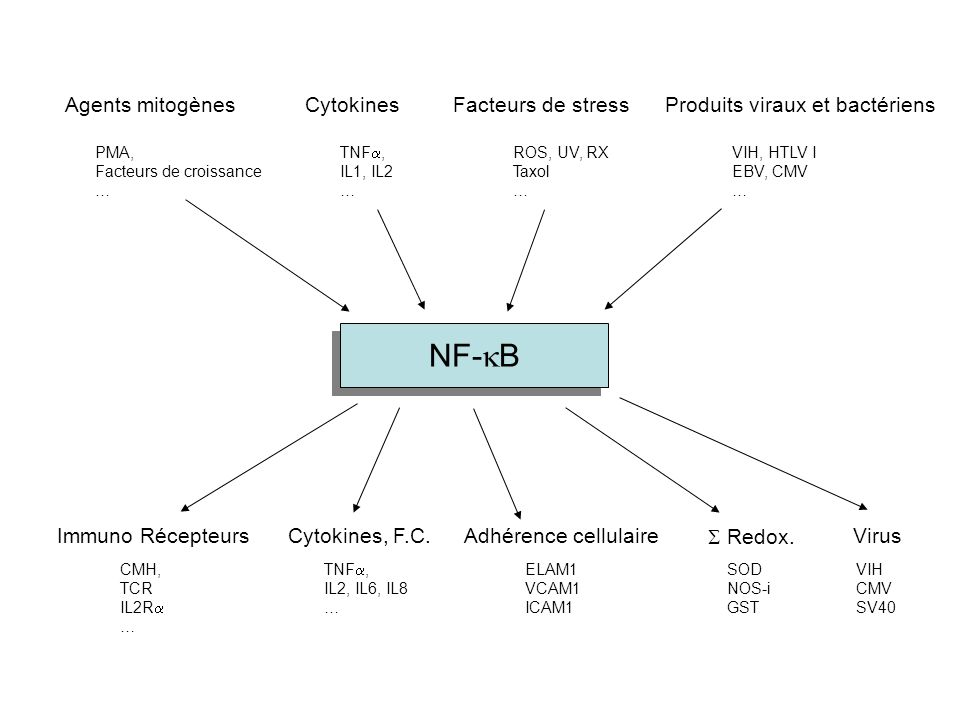 NF-kB Agents mitogènes Cytokines Facteurs de stress