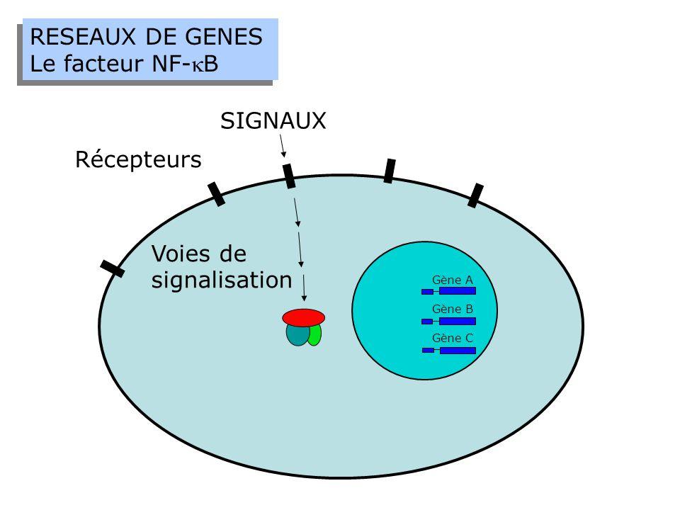 RESEAUX DE GENES Le facteur NF-kB SIGNAUX Récepteurs Voies de