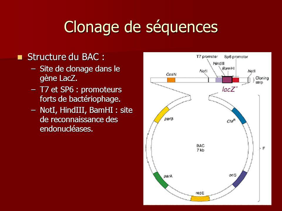 Clonage de séquences Structure du BAC :
