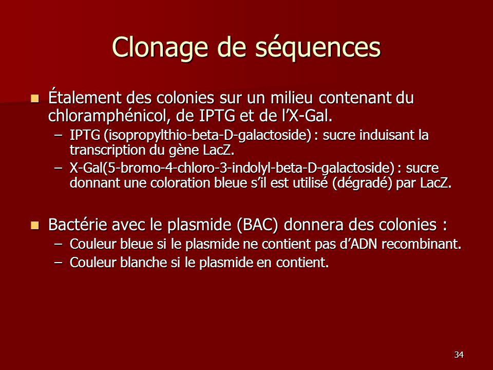 Clonage de séquences Étalement des colonies sur un milieu contenant du chloramphénicol, de IPTG et de l'X-Gal.