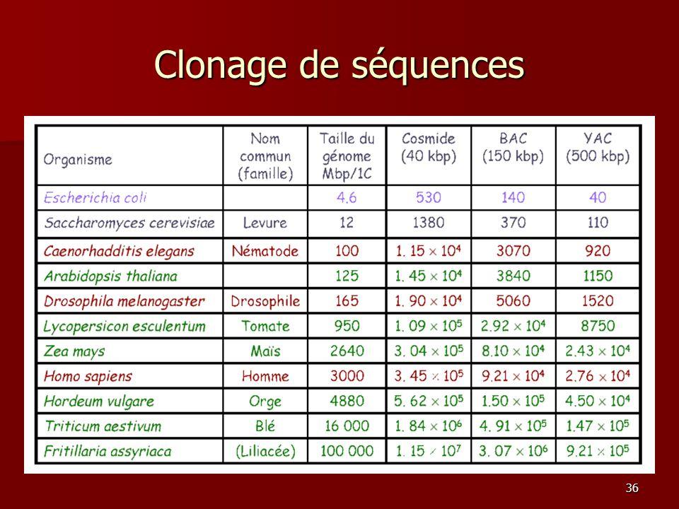 Clonage de séquences