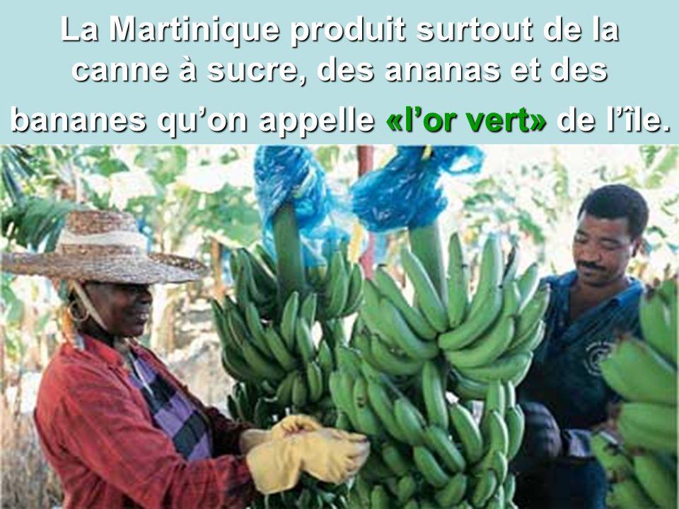 La Martinique produit surtout de la canne à sucre, des ananas et des bananes qu'on appelle «l'or vert» de l'île.
