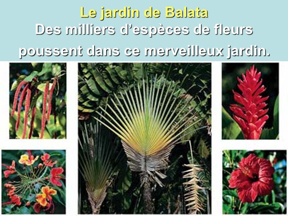 Le jardin de Balata Des milliers d'espèces de fleurs poussent dans ce merveilleux jardin.