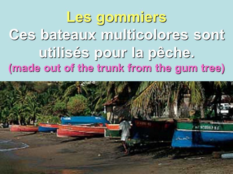 Les gommiers Ces bateaux multicolores sont utilisés pour la pêche