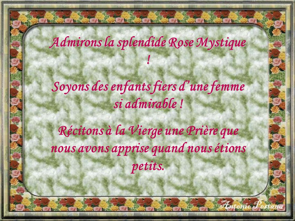 Admirons la splendide Rose Mystique !