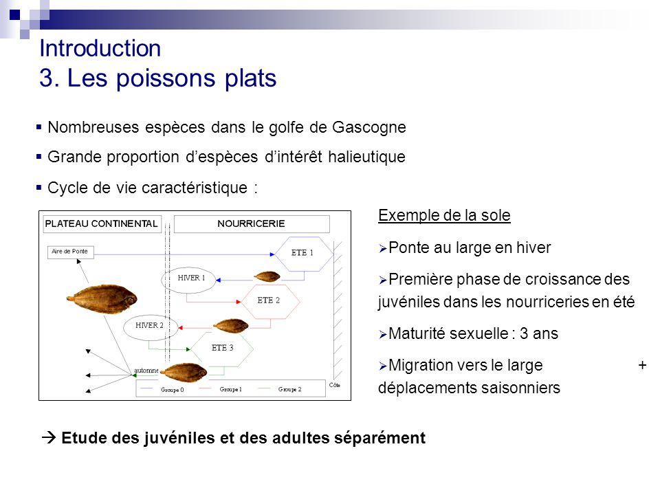 Introduction 3. Les poissons plats