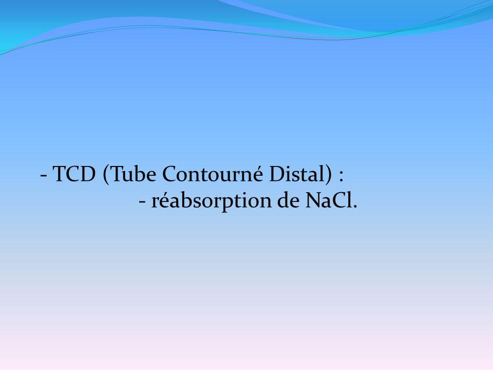 - TCD (Tube Contourné Distal) :