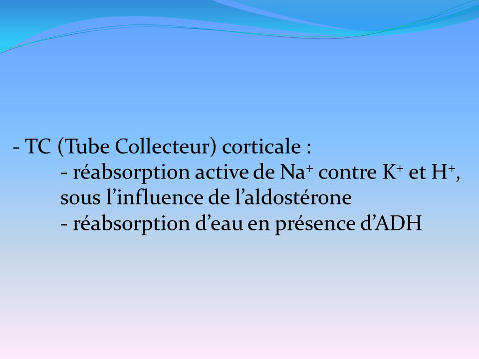 - TC (Tube Collecteur) corticale :