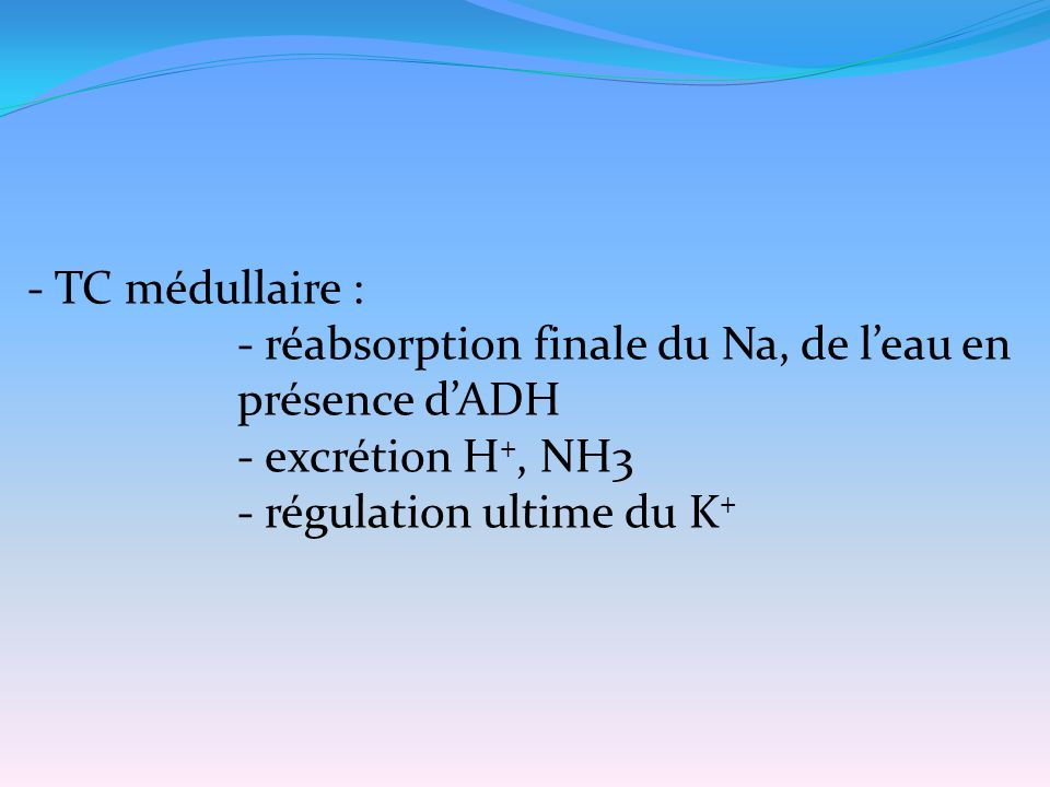 - TC médullaire : - réabsorption finale du Na, de l'eau en présence d'ADH.