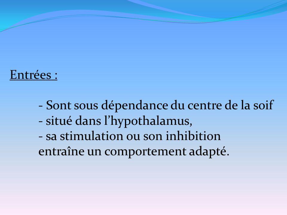 Entrées : - Sont sous dépendance du centre de la soif. - situé dans l'hypothalamus, - sa stimulation ou son inhibition.