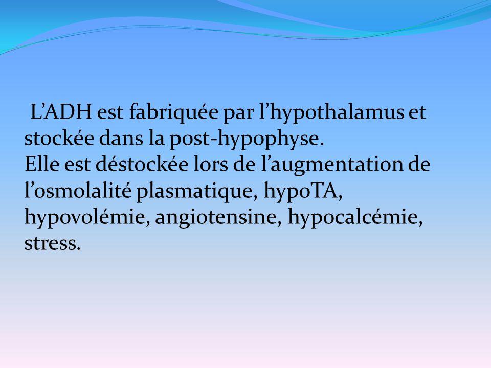 L'ADH est fabriquée par l'hypothalamus et stockée dans la post-hypophyse.