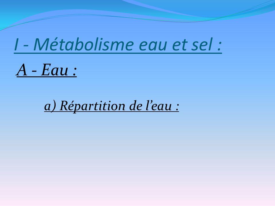 I - Métabolisme eau et sel :
