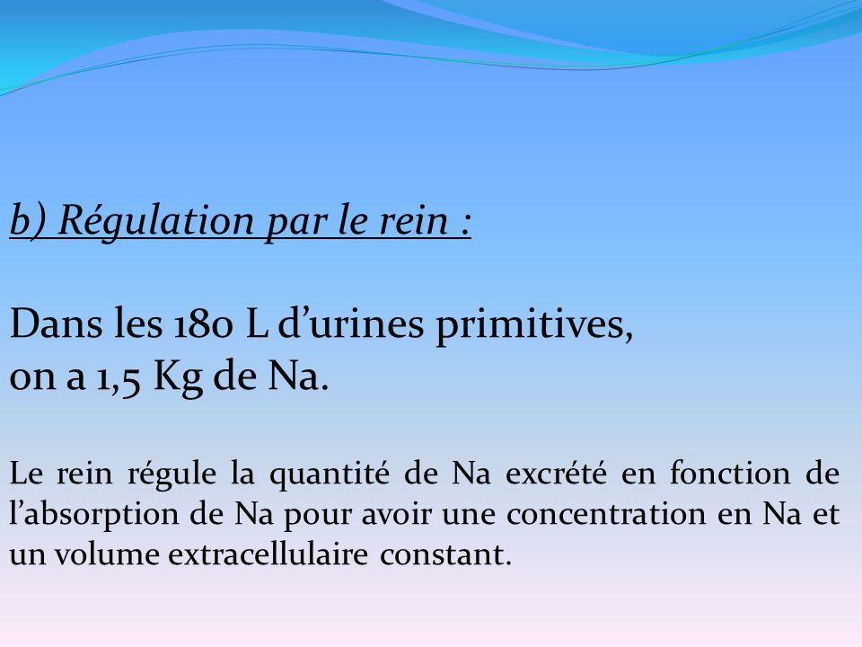 b) Régulation par le rein : Dans les 180 L d'urines primitives,