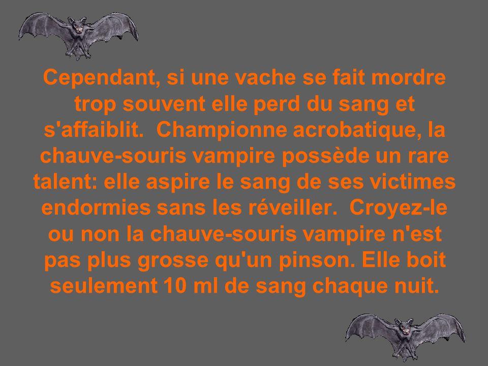 Cependant, si une vache se fait mordre trop souvent elle perd du sang et s affaiblit. Championne acrobatique, la chauve-souris vampire possède un rare talent: elle aspire le sang de ses victimes endormies sans les réveiller. Croyez-le ou non la chauve-souris vampire n est pas plus grosse qu un pinson.