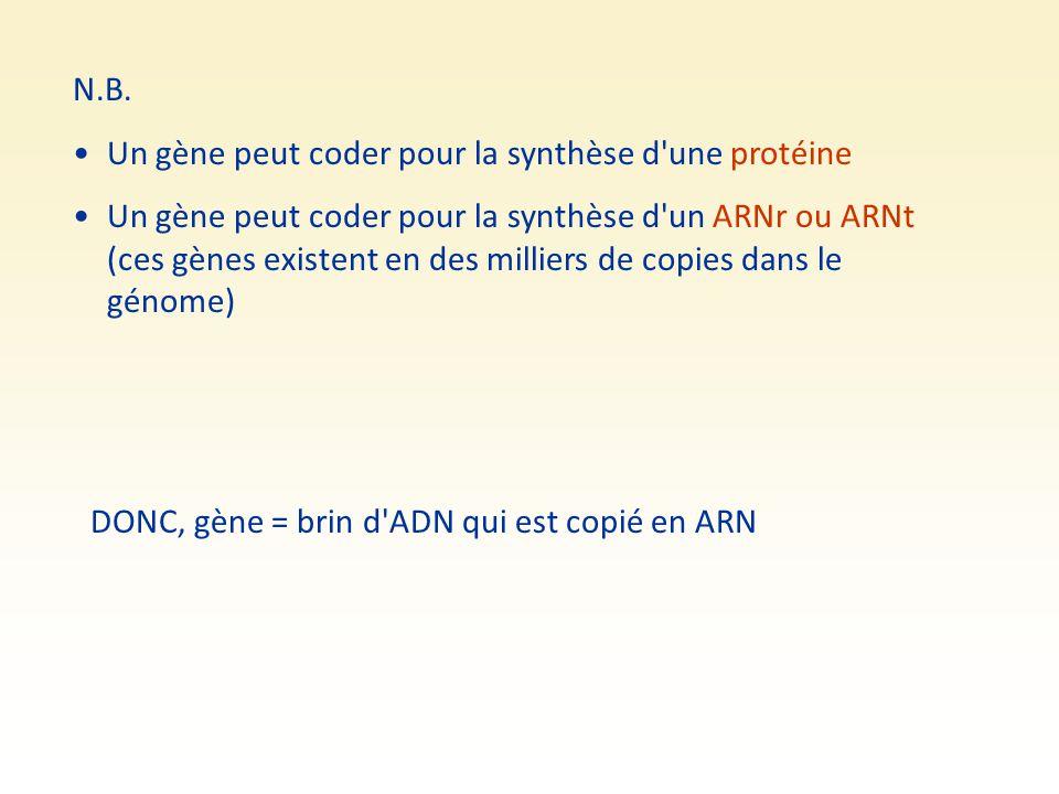 N.B. Un gène peut coder pour la synthèse d une protéine.