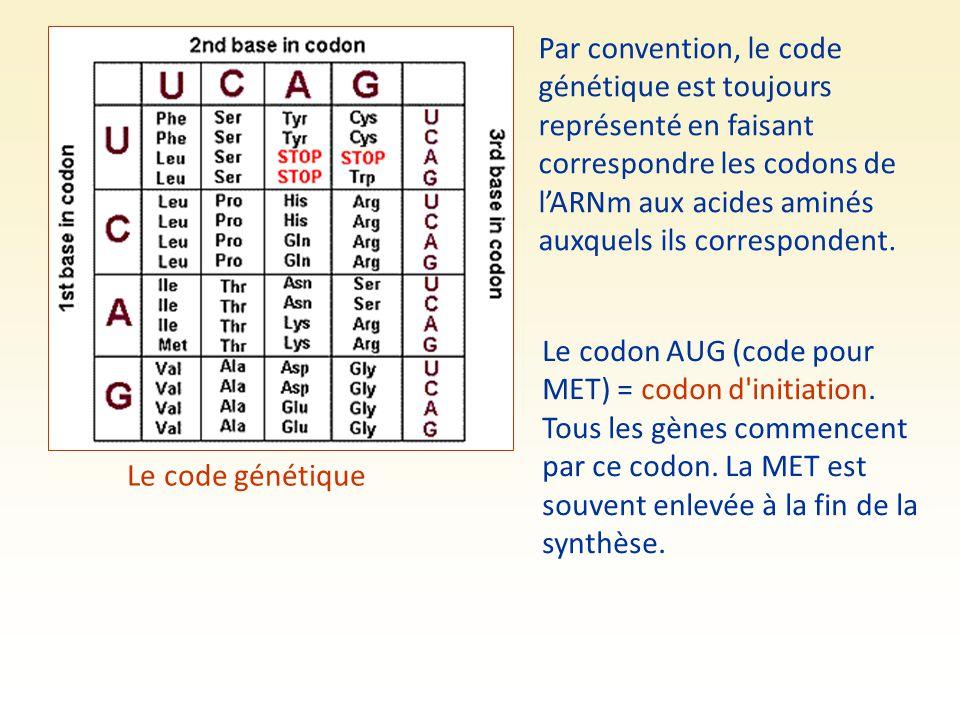 Par convention, le code génétique est toujours représenté en faisant correspondre les codons de l'ARNm aux acides aminés auxquels ils correspondent.