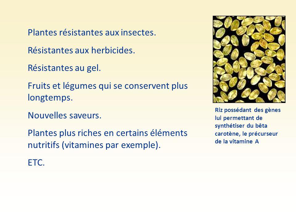 Plantes résistantes aux insectes. Résistantes aux herbicides.