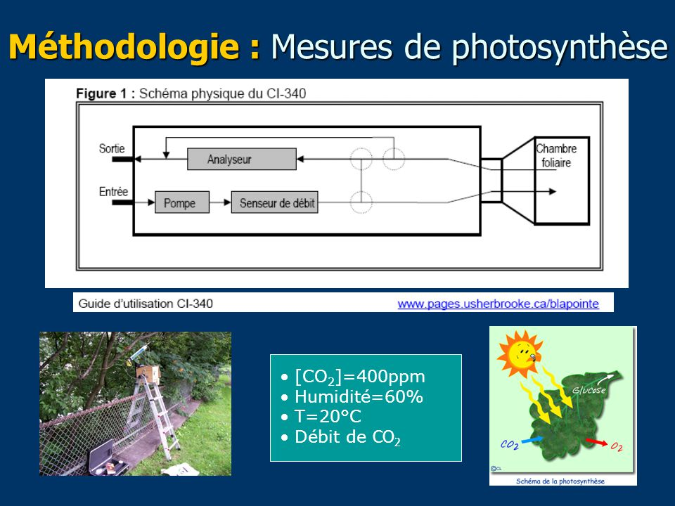 Méthodologie : Mesures de photosynthèse