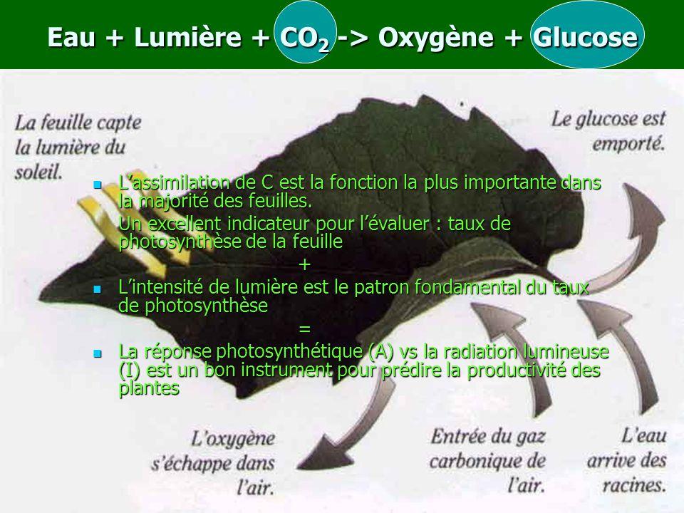 Eau + Lumière + CO2 -> Oxygène + Glucose