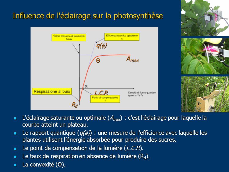 Influence de l éclairage sur la photosynthèse