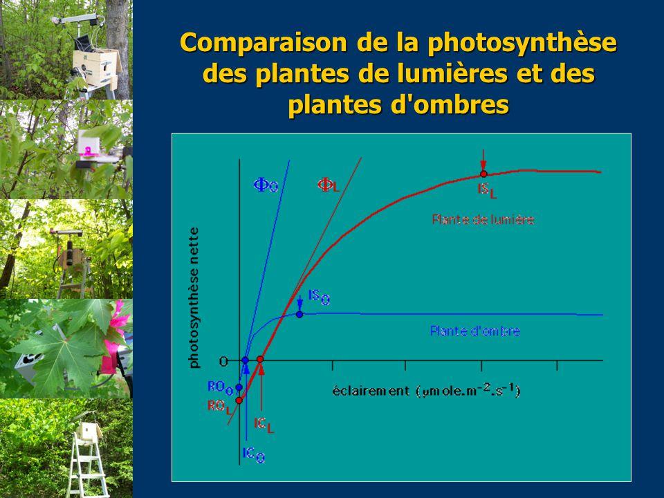 Comparaison de la photosynthèse des plantes de lumières et des plantes d ombres