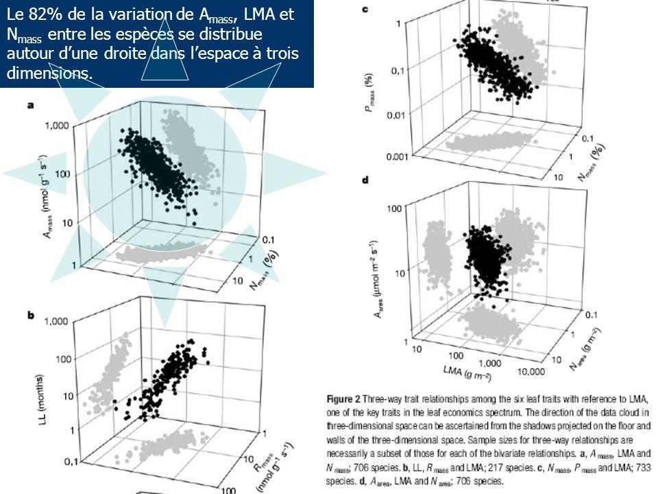 Le 82% de la variation de Amass, LMA et Nmass entre les espèces se distribue autour d'une droite dans l'espace à trois dimensions.