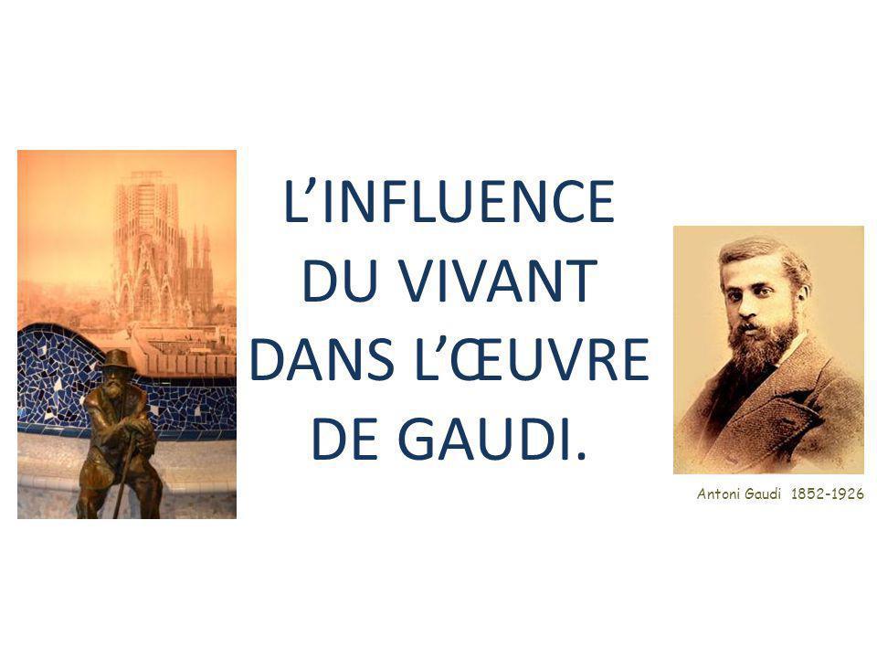 L'INFLUENCE DU VIVANT DANS L'ŒUVRE DE GAUDI.