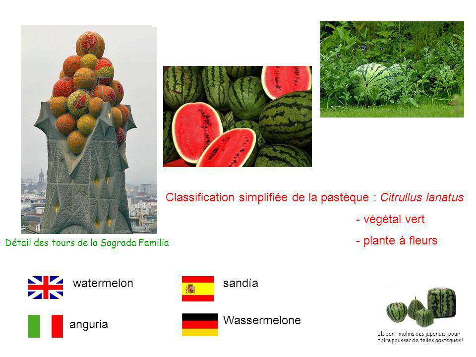 Classification simplifiée de la pastèque : Citrullus lanatus