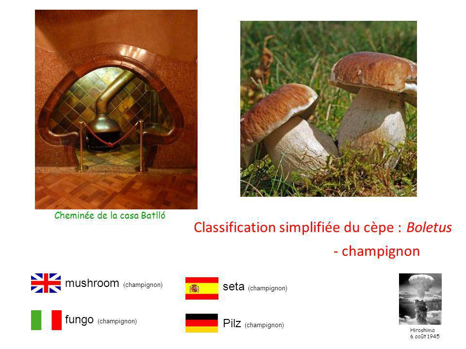 Classification simplifiée du cèpe : Boletus - champignon