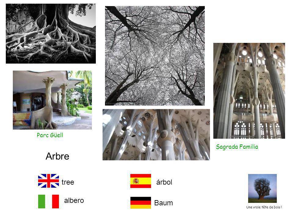 Arbre tree árbol albero Baum Parc Güell Sagrada Familia