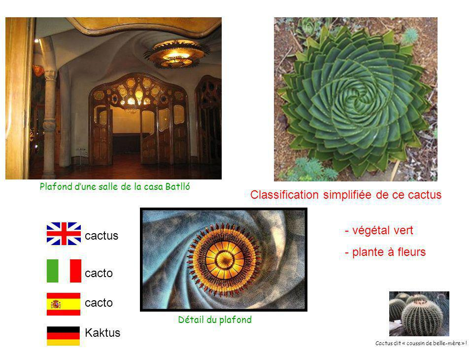 Classification simplifiée de ce cactus - végétal vert