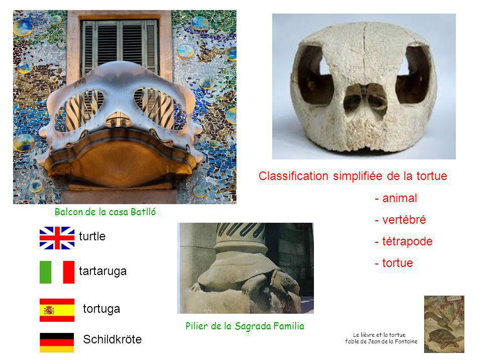 Classification simplifiée de la tortue - animal - vertébré - tétrapode